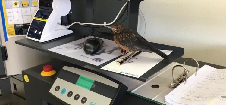 Ein Vogel in St. Lukas